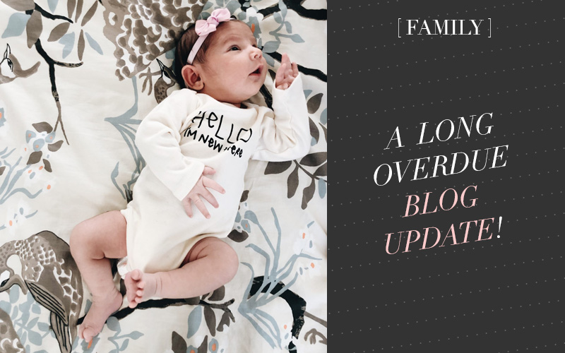 A New Baby and a Long Overdue Update!